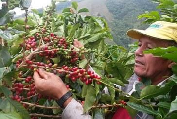 Cafés especiales del Huila vendidos hasta 3,4 veces por encima del precio