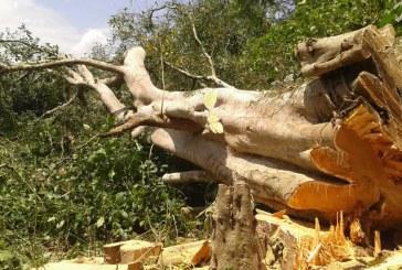 Denuncian tala indiscriminada en La Jagua, Huila