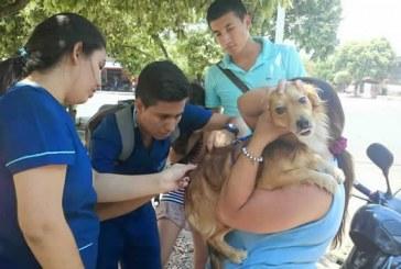 Vacunadas mascotas de la Comuna 1 de Neiva
