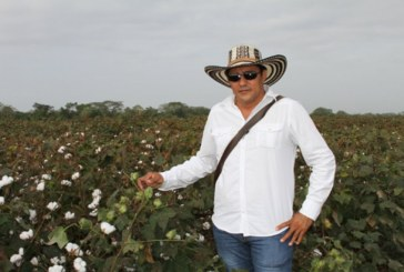 Córdoba cosecha el oro blanco