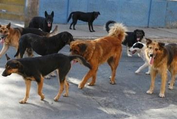 Animales callejeros: problemática ambiental y social