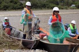 45 mil peces rescatados en El Quimbo durante llenado