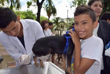 Vacunación gratuita de perros y gatos en Comuna 8 de Neiva