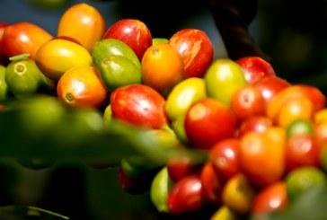 Nestlé lanza marca de café para apoyar a campesinos afectados por el conflicto
