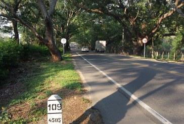 5.015 árboles serán sembrados en compensación en vía Neiva – Campoalegre