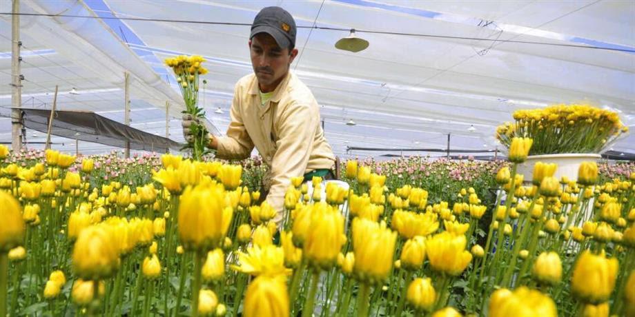 Día de San Valentín se embellece con más de 500 millones de flores colombianas