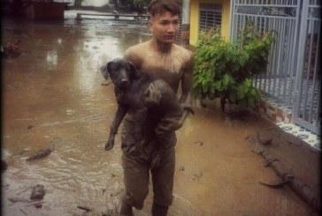 Jornada por los animales afectados por ola invernal en Campoalegre
