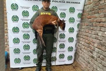 Rescatan oso perezoso y venado, en zona rural del Huila